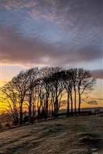 Preview iPhone wallpaper Trees, sunset, farmland