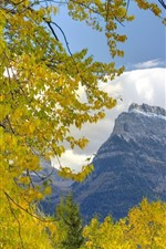 Preview iPhone wallpaper Trees, yellow leaves, mountain, autumn