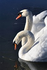 Preview iPhone wallpaper Two white swans, lake, wings