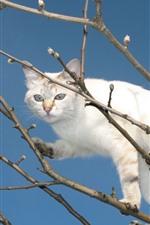 White cat, tree, twigs