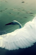 Preview iPhone wallpaper White swan flying, wings, lake