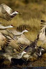 Preview iPhone wallpaper Wildlife, birds flight, swamp