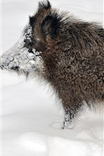 Preview iPhone wallpaper Wildlife, boar, snow, winter