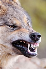 Preview iPhone wallpaper Wolf, teeth, mouth, face, wildlife