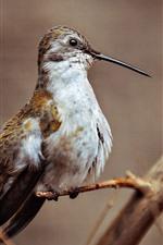 Woodpecker, long beak, tree branch