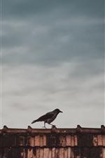 iPhone обои Птица, крыша