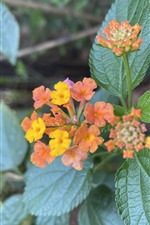 Pequenas flores coloridas, folhas verdes