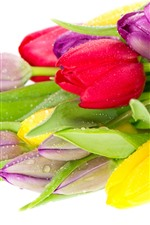 Preview iPhone wallpaper Colorful tulips, red, purple, yellow, water droplets