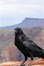 Preview iPhone wallpaper Crows, bird, mountains