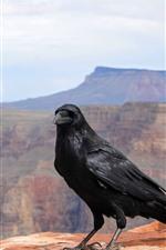 iPhone обои Вороны, птица, горы