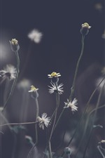 Preview iPhone wallpaper Dandelion, plants, gray background