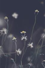 Preview iPhone wallpaper Dandelion, plants, gray background