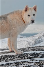 Preview iPhone wallpaper Dog look back, winter, snow