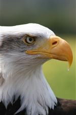 Preview iPhone wallpaper Eagle, head, side view, beak