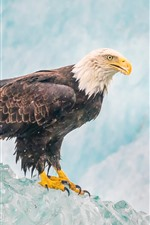 Preview iPhone wallpaper Eagle, ice, beak