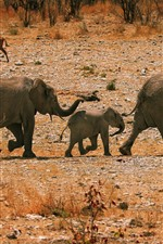 Preview iPhone wallpaper Elephants, family, walk