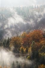 Forest, trees, autumn, fog, morning, sun rays