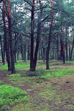 Forest, trees, ground, grass