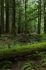 Forest, trees, moss, green