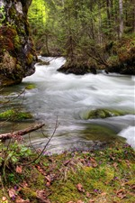 Preview iPhone wallpaper Forest, trees, river, water stream, moss