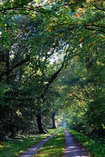 Preview iPhone wallpaper Forest, trees, trail, sunshine