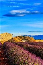iPhone壁紙のプレビュー フランス、プロヴァンス、ラベンダーの花のフィールド、木、青い空