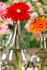 Preview iPhone wallpaper Gerbera, flowers, orange, yellow, red, glass bottles