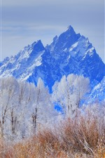 Preview iPhone wallpaper Grand Teton National Park, mountains, trees, snow, winter, USA