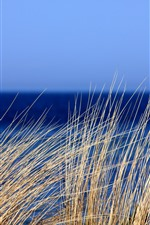 Grass, blue sea