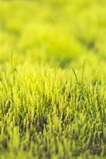 Preview iPhone wallpaper Grass, green, spring