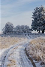 Preview iPhone wallpaper Grass, trees, path, snow, winter