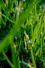 Preview iPhone wallpaper Green grass, dew, morning