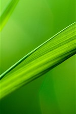 Preview iPhone wallpaper Green grass leaf, dew, nature