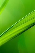Green grass leaf, dew, nature