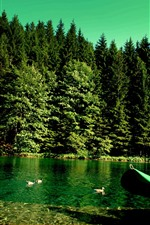 Preview iPhone wallpaper Green trees, duck, lake, boat