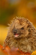 Preview iPhone wallpaper Hedgehog, wildlife, yellow leaves, autumn