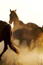 Preview iPhone wallpaper Horses running, grass, fog, morning