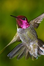 Preview iPhone wallpaper Hummingbird flying, wings, tail