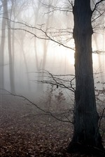 Hungary, trees, fog, sun rays, morning