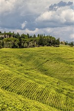 Preview iPhone wallpaper Italy, Tuscany, trees, green fields, clouds