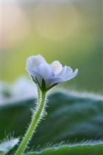 Little white flowers, stem, green leaves