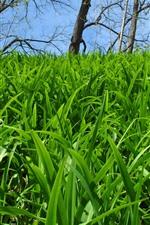 Many green grass, trees, nature