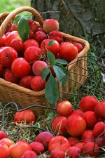 Preview iPhone wallpaper Many red plums, fruit, basket