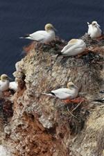Many seagulls, rest, rocks, sea
