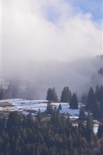 Preview iPhone wallpaper Mountains, trees, snow, fog, winter