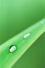 Preview iPhone wallpaper One grass leaf, water droplets, green