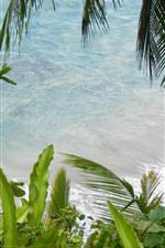 Sea, palm leaves, plants, beach, tropical