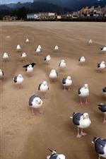 Seagulls, coast, beach, houses