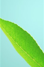 Some green leaves close-up