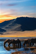 Preview iPhone wallpaper Some horse drink water, lake, mountains